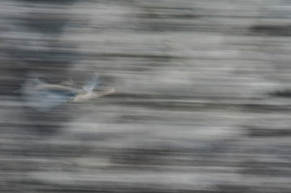 fiskeelva-i-vinterdrakt-2