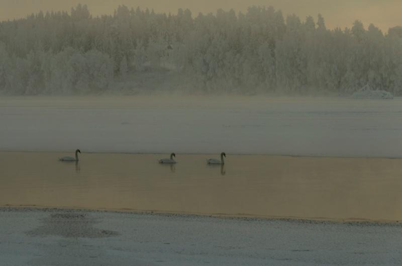 fiskeelva-i-vinterdrakt-4