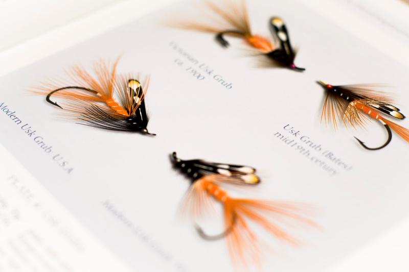 Shrimp-føre-4