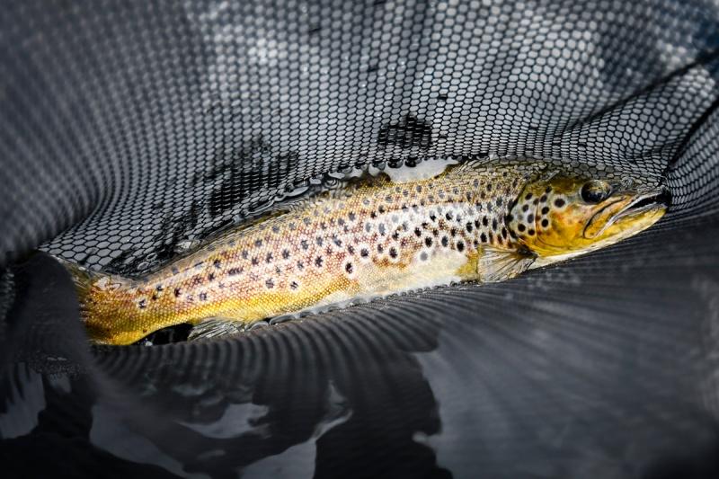 Streamerfiske rundt grunner og skjær-4