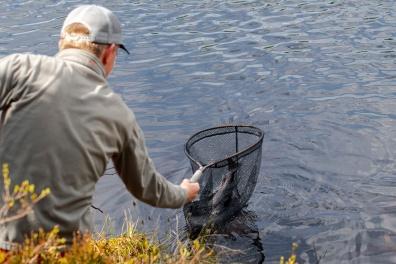 Nok en fisk finner håvmaskene. Foto: Johannes Eid