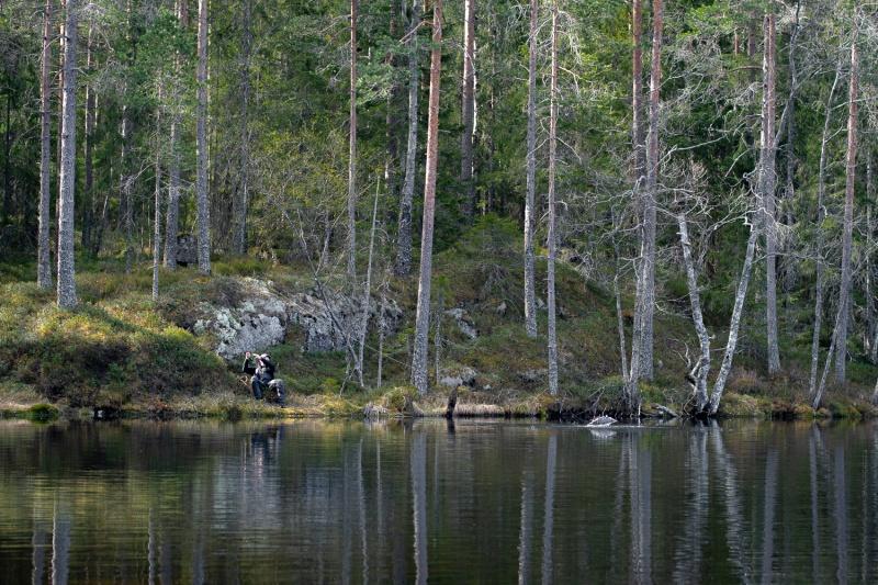 Skogsørret-3