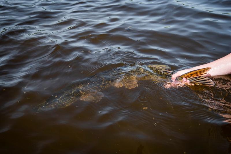 Flatsfiske på norsk-13